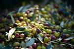 koroneiki olive oil,oil with cold extraction,p.d.o.,acidity,product of greece,cretan product,250ml olive oil,elaiolado sitia,
